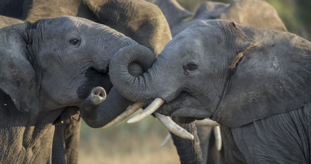 The Ivory TradeThe Ivory Trade